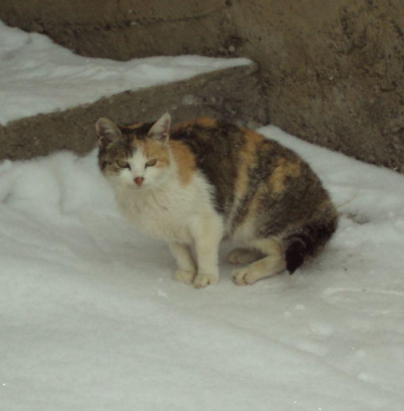 Pregedate slike iz članka: Psi, mačke, snijeg (foto, video)
